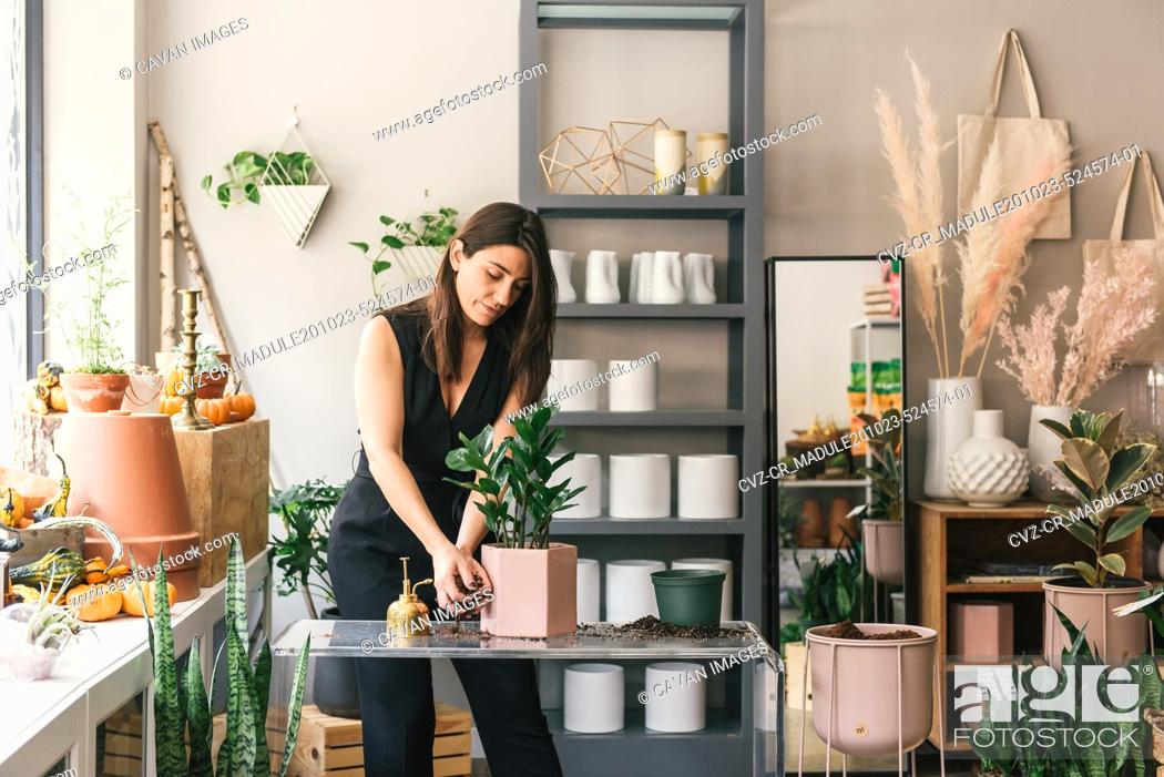 Stock Photo: Adult woman planting succulent in pretty stylish pot for demonstration.