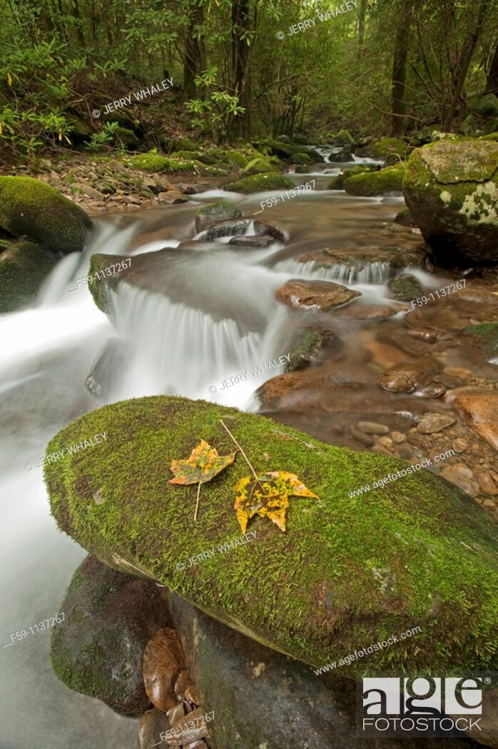 Imagen: Cosby Creek, Great Smoky Mtns Nat  Park, TN.