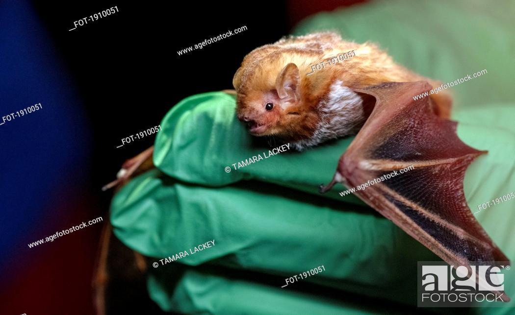Imagen: Close up hand with green glove holding bat.