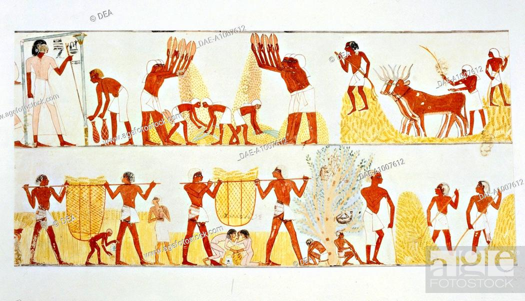 Stock Photo: Nina M. Davies (1881-1965), Ancient Egyptian Painting, Chicago,1936. Plate: reaping, winnowing and threshing of wheat. Replica of fresco from Thebes.