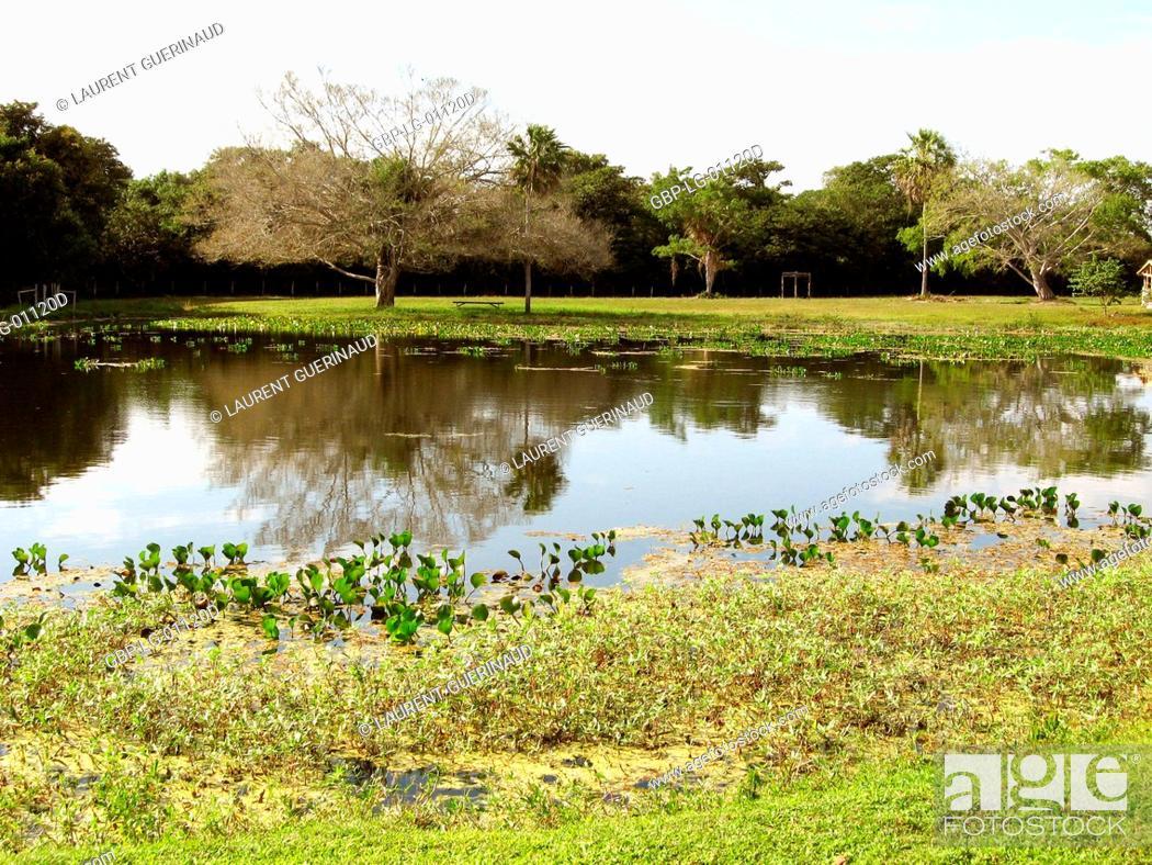 Stock Photo: Landscape, Nature, Pantanal, Mato Grosso do Sul, Brazil.