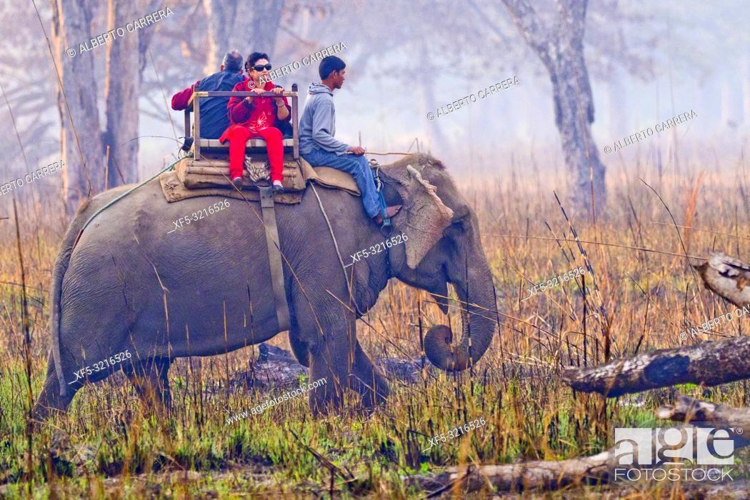 Imagen: Elephant Safari, Domestic Elephant, Grasslands and Forest, Royal Bardia National Park, Bardiya National Park, Nepal, Asia.