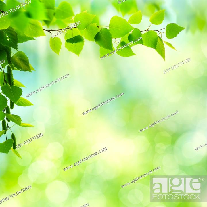 Stock Photo: Abstract seasonal backgrounds with beech trees and beauty summer texture.