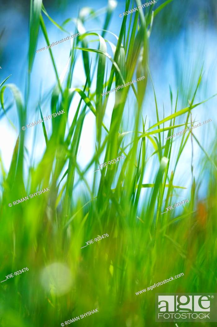 Stock Photo: Green grass against blue sky, close-up.