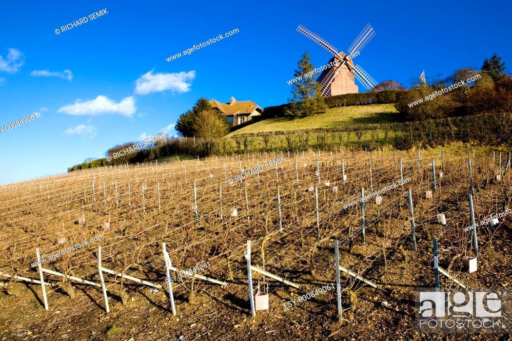 Stock Photo: windmill and vineyard near Verzenay, Champagne Region, Burgundy, France.