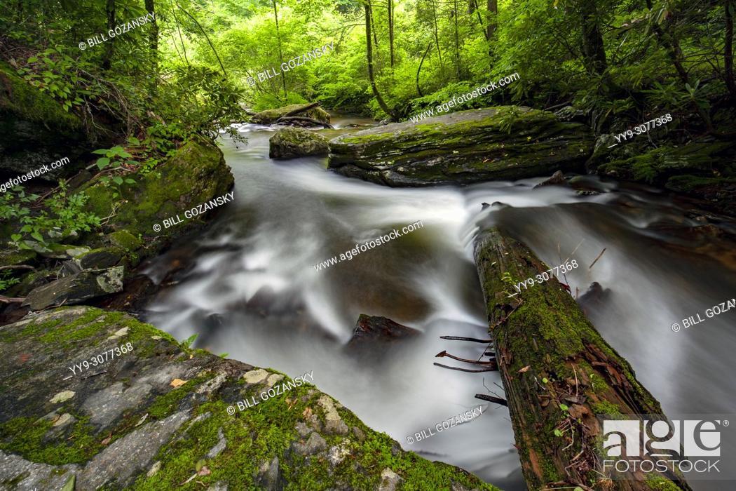 Stock Photo: Avery Creek - Pisgah National Forest, near Brevard, North Carolina, USA.