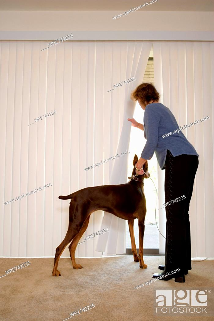 Stock Photo: Woman with Doberman looking out of blinds.