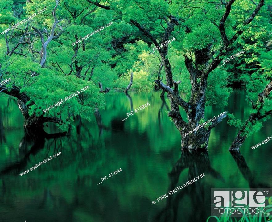 Stock Photo: Jusanji Lake,Mt  Juwangsan National Park,Gyeongbuk,Korea.