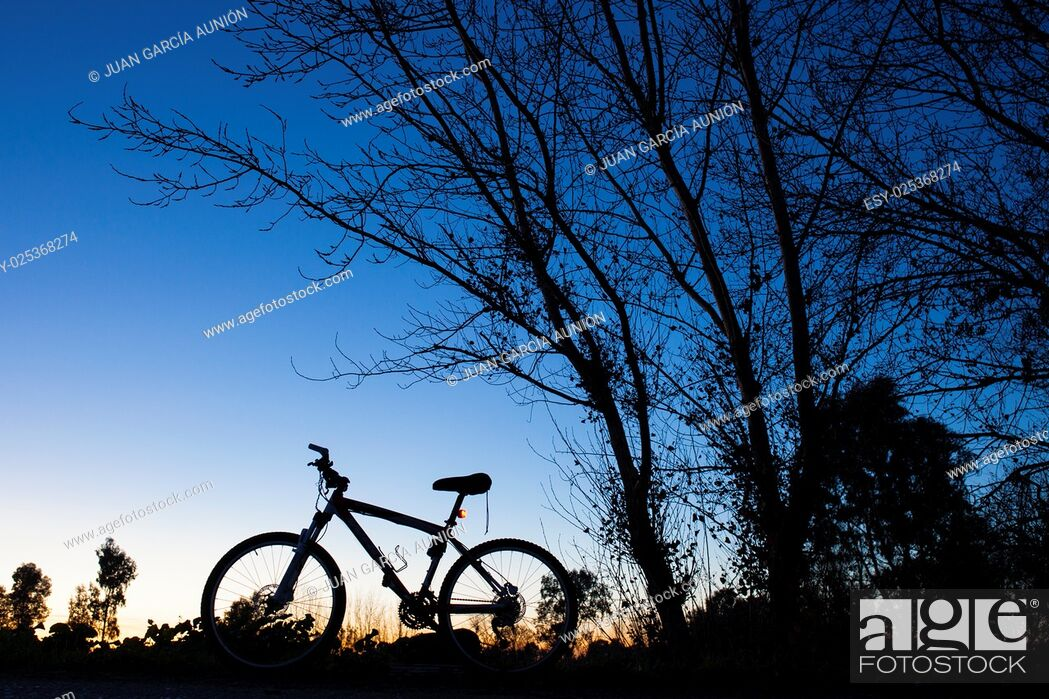 Imagen: Silhouette of Mountain bike at sunset under tree on blue sky.