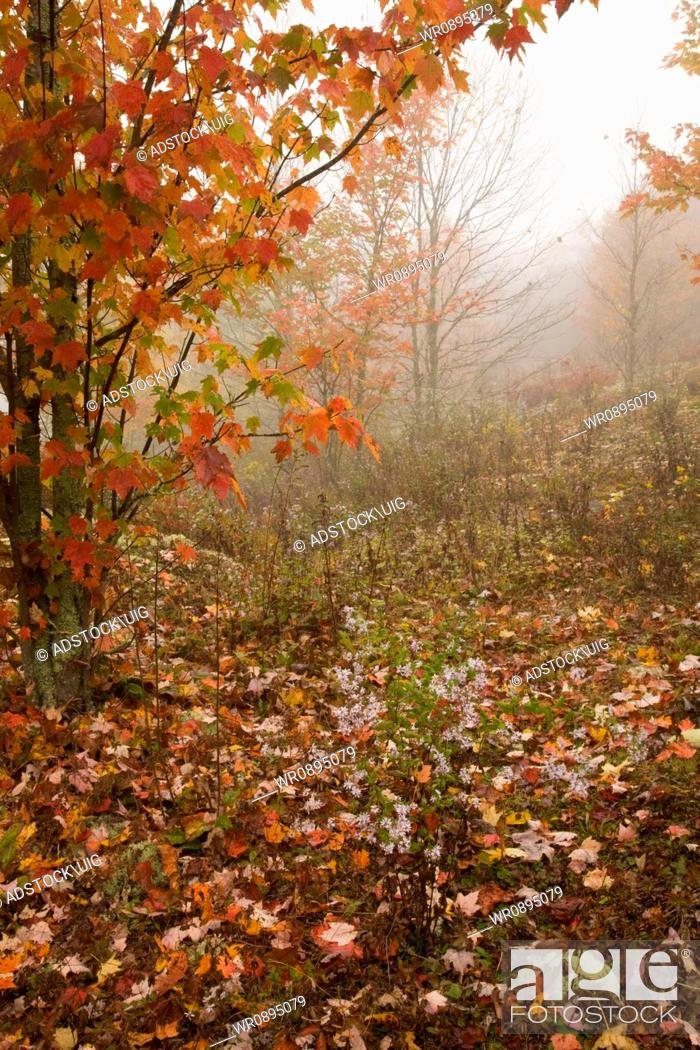 Stock Photo: Autumn, Blue Ridge Parkway, Western NC.
