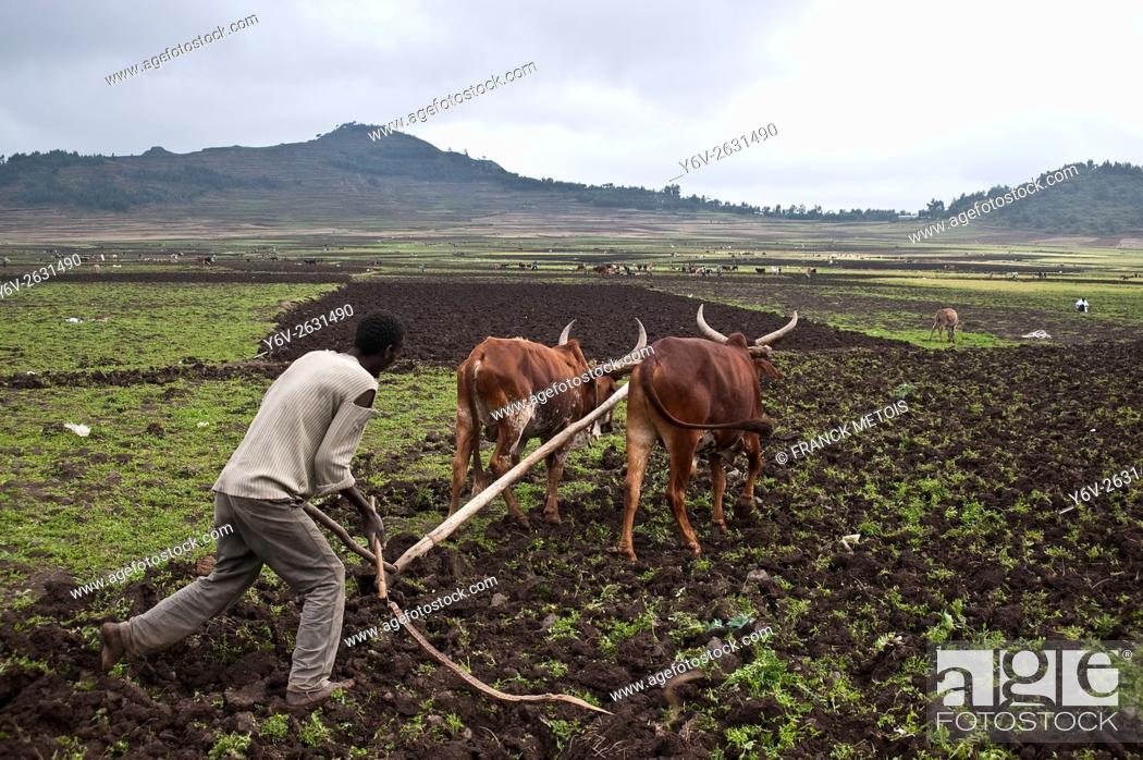 Stock Photo: Farmer ploughing a field at Korem ( Tigray state, Ethiopia). Korem and its surroundings became famous during the 1984-1985 famine as the worst hit place.