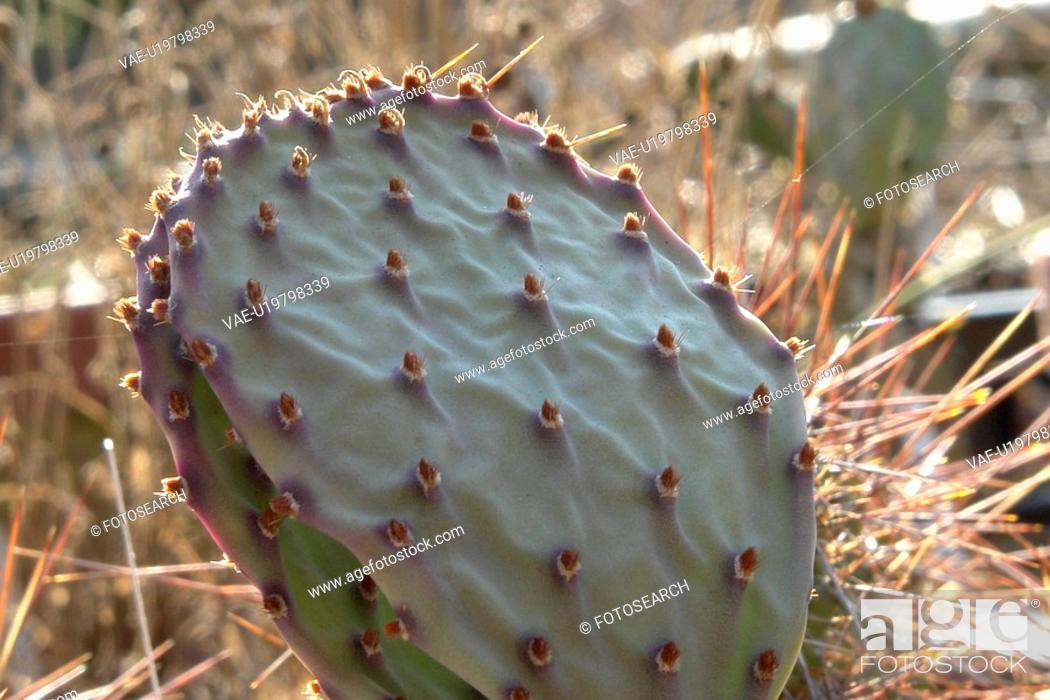 Stock Photo: felder, wiesen, berne, blooms, blumenrfarben, botany, cacti.