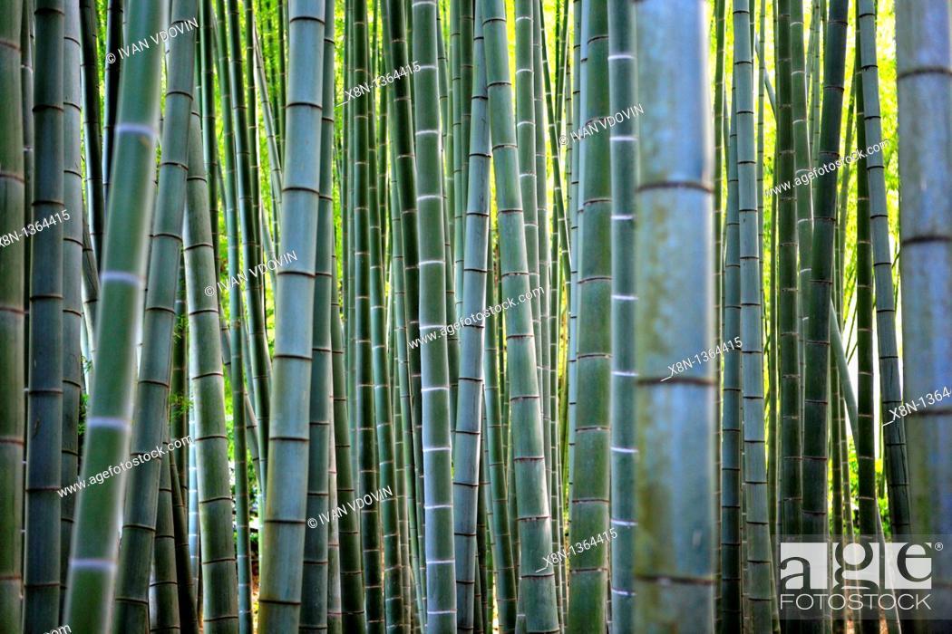 Stock Photo: Bamboo, Zen monastery garden, Kamakura, Hokoku-ji, Japan.