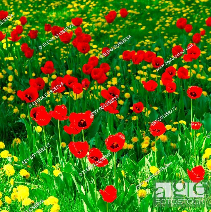 Stock Photo: Flower field.