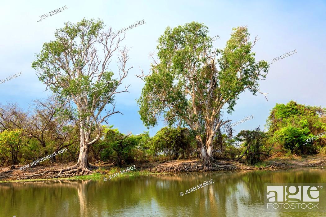 Stock Photo: Yellow Water. Kakadu National Park. Northern Territory. Australia.