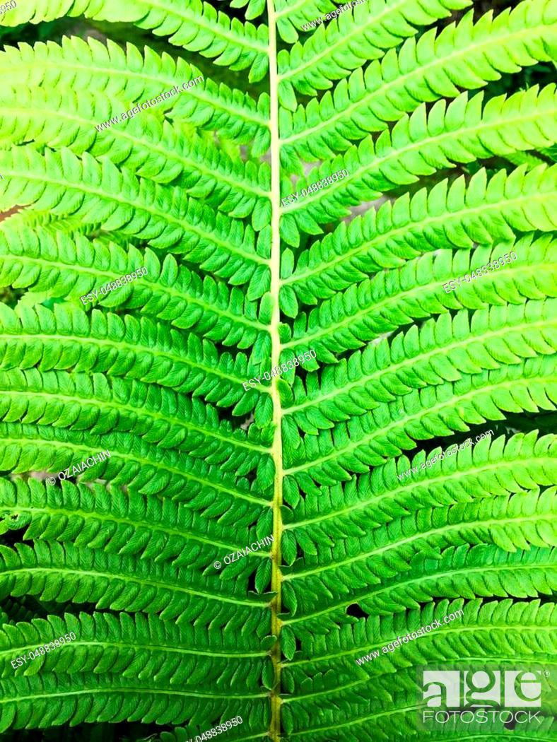 Stock Photo: Spring green fern.