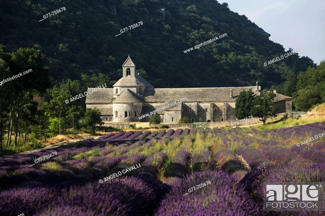 Stock Photo: France  Provence  Vaucluse, Senanque Abbey  Lavender field.