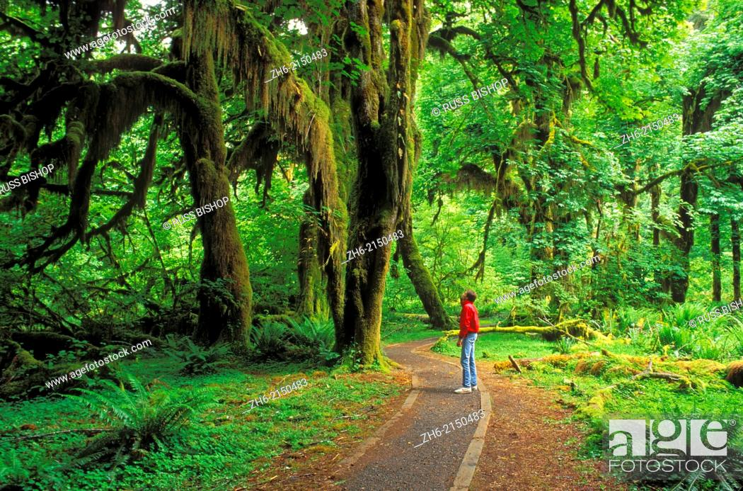 Stock Photo: Visitor on the Hall of Mosses Trail, Hoh Rain Forest, Olympic National Park, Washington USA.