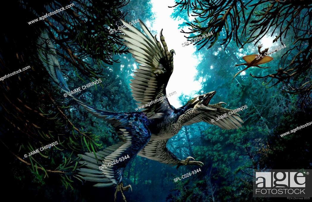 Stock Photo: Microraptor, artwork.