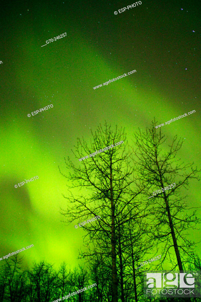 Stock Photo: Northern Lights Alberta Canada.