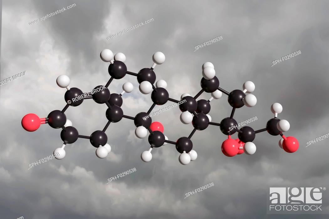 Imagen: Molecular model of cortisol. Cortisol is a steroid hormone, produced by the adrenal gland, released to help the body deal with stressful situations by impacting.