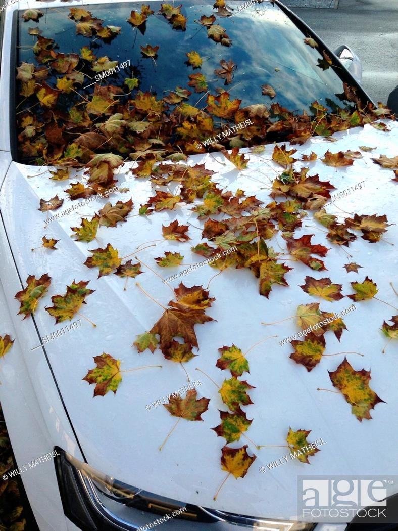 Stock Photo: Parked car, covered with autumn leaves of a maple tree, Bavaria, Germany, Europe.