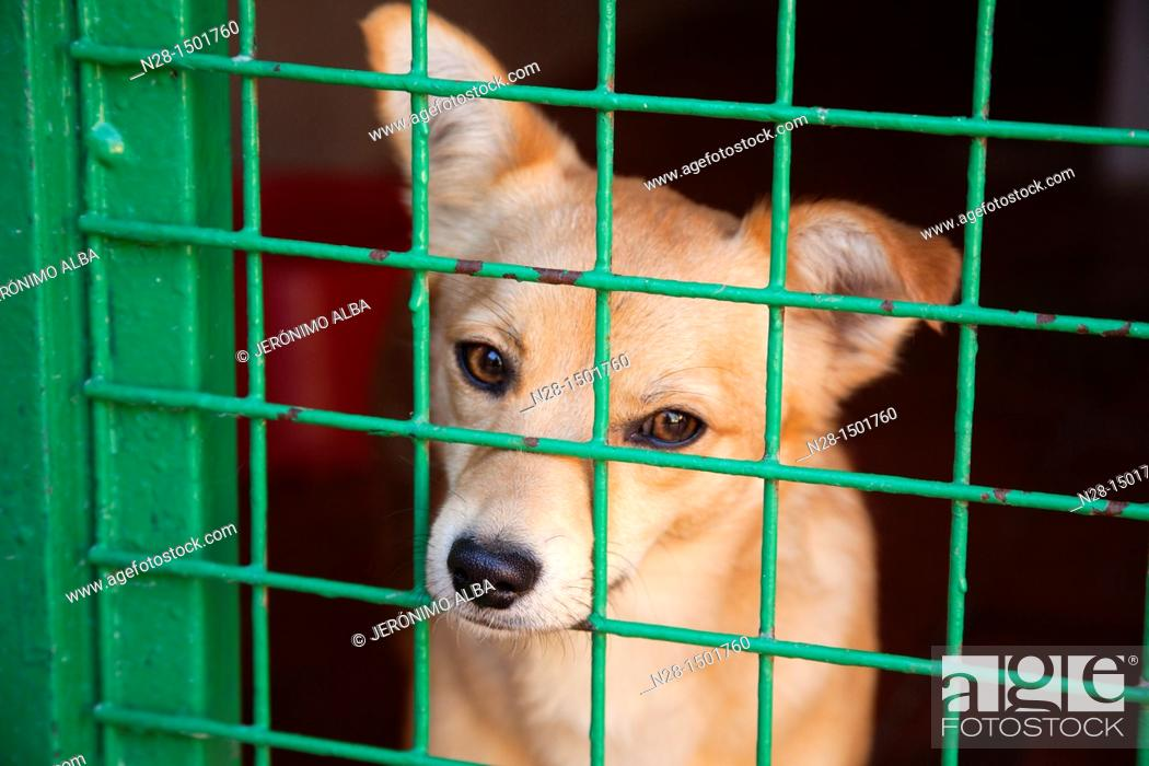 Stock Photo: Dog in a animal shelter.