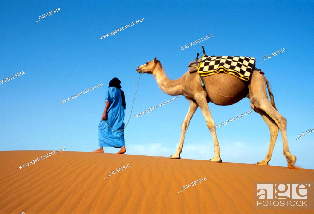 Stock Photo: Tuareg with camel. Merzouga Dunes. Morocco.