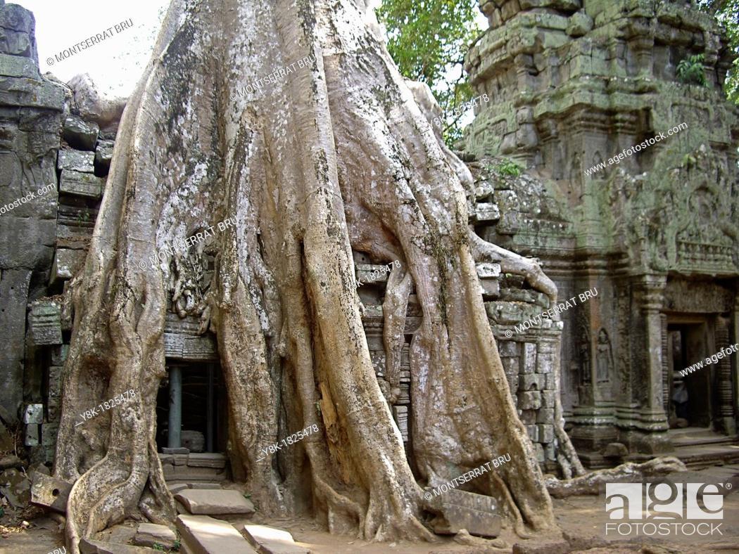 Stock Photo: Huge rootsystem invading the walls at Angkor Ta Prohm Temple, Cambodia.