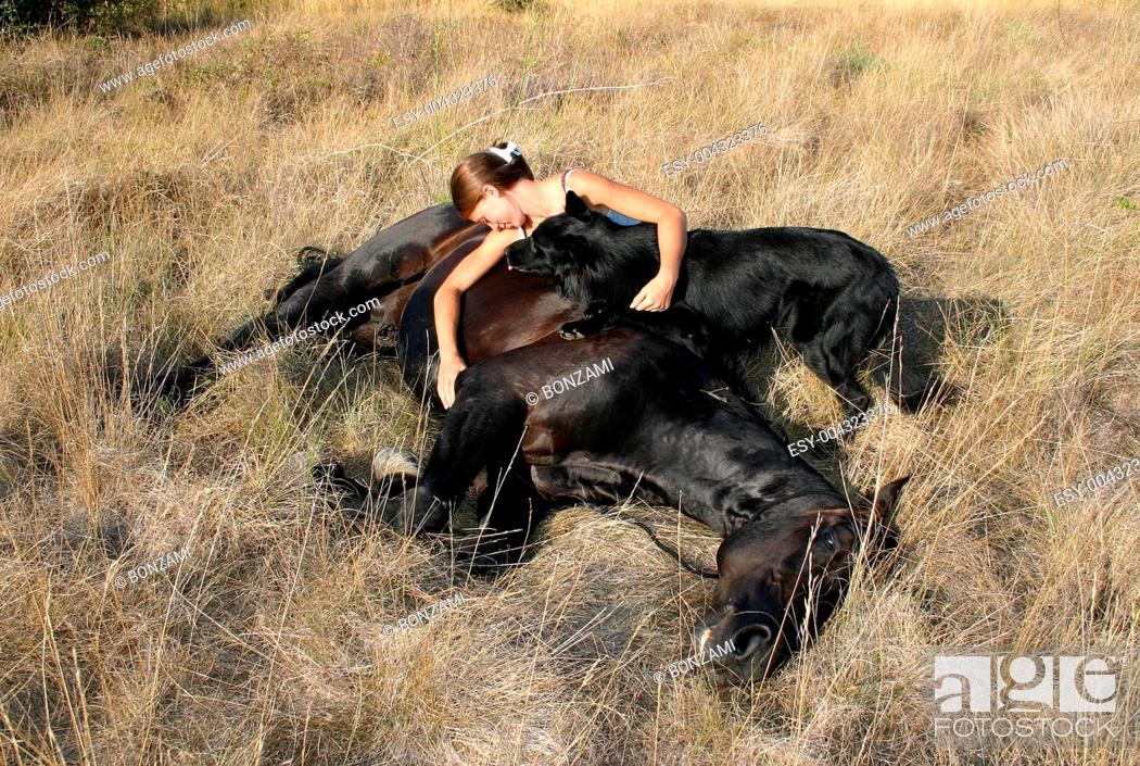 Stock Photo: horse laid down and riding girl.