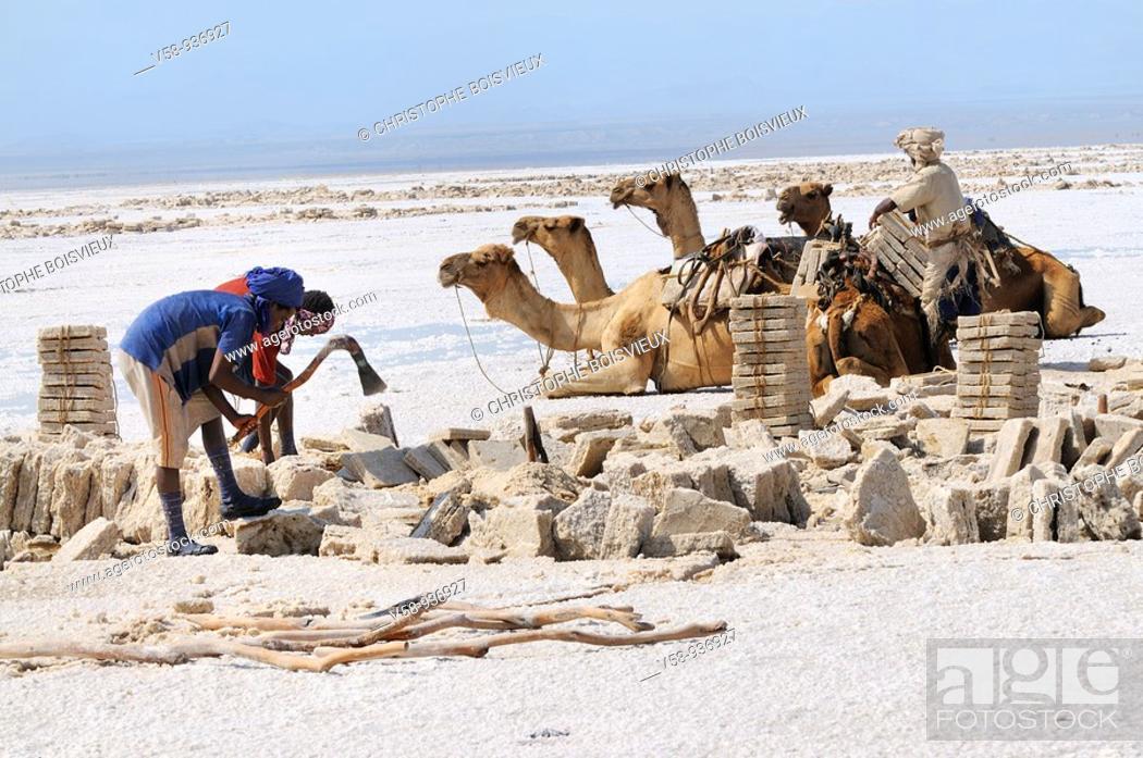 Stock Photo: Ethiopia, Afar region, Asale salt lake, Salt cutting and loading  Salt is shaped by expert Afar cutters called Hadalimera in rectangular blocks that weigh 7 kgs.