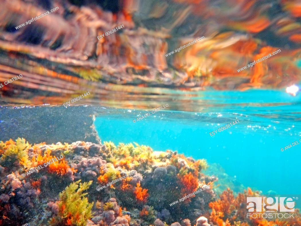 Imagen: Sea bed in San Antonio cape nature reserve, Denia, Alicante, Spain.