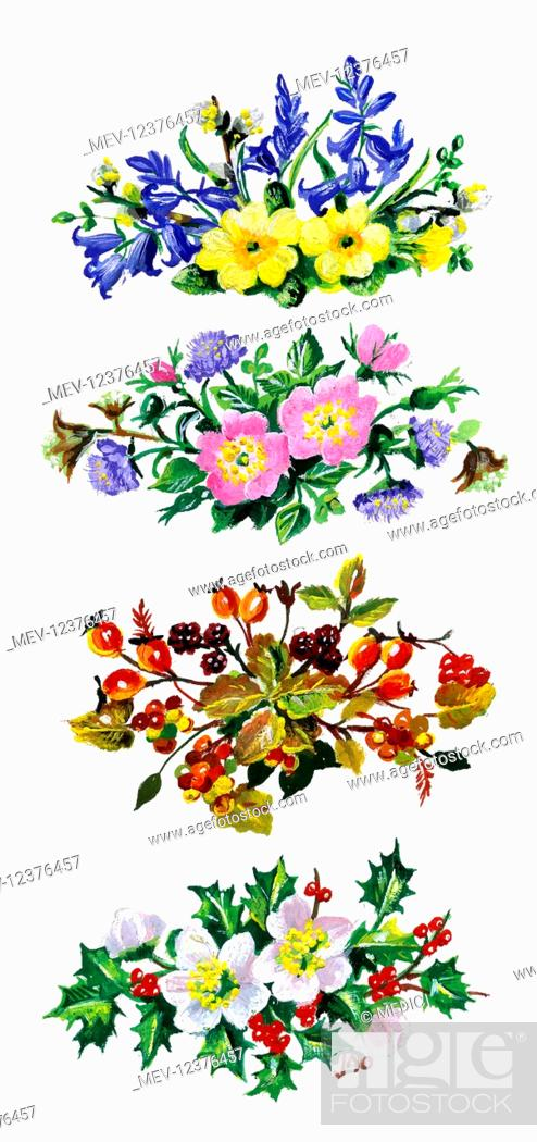 botanical drawings of wild primroses - Google Search | Botanical painting,  Botanical drawings, Plant illustration