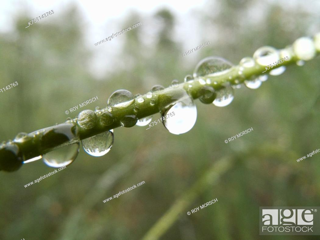 Stock Photo: Drops of water on blade of grass.