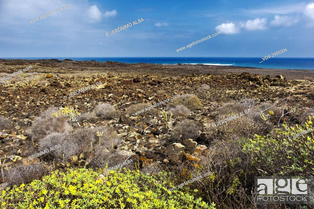 Stock Photo: Volcanic landscape and vegetation, Haria. Lanzarote Island. Canary Islands Spain. Europe.
