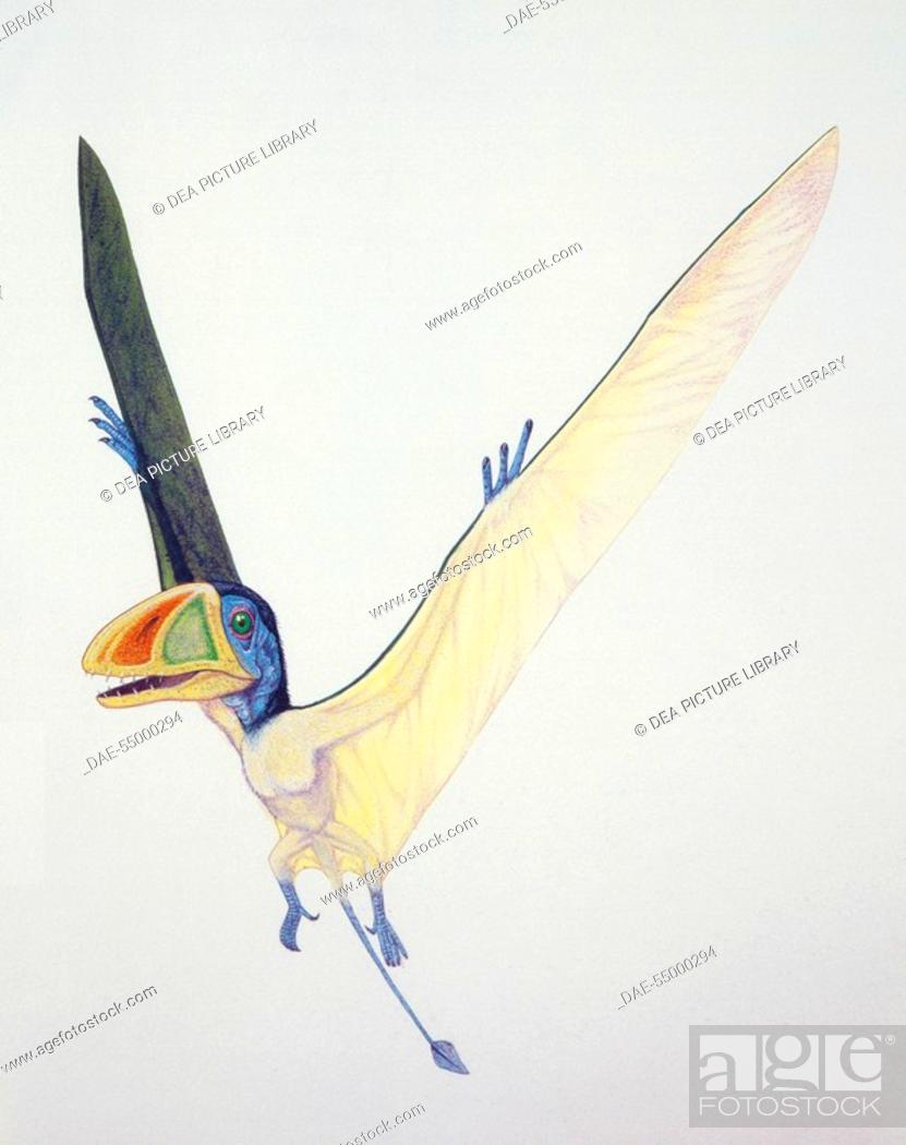 Stock Photo: Palaeozoology - Jurassic period - Pterosaurs - Dimorphodon - Art work.
