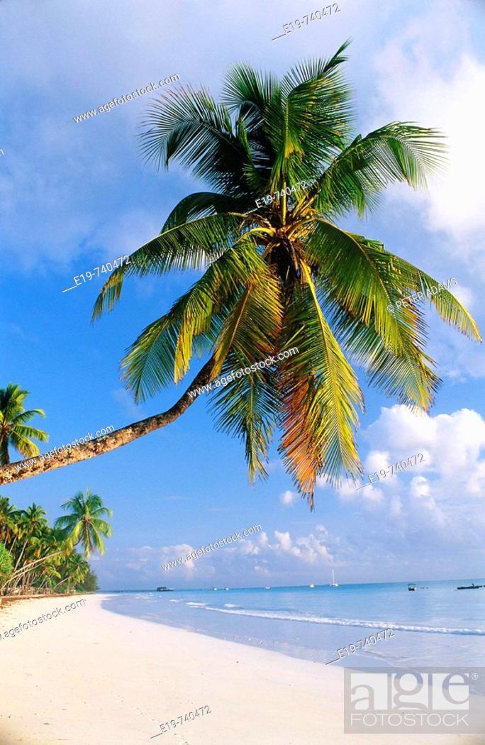 Stock Photo: Palm trees, Zanzibar, Tanzania.