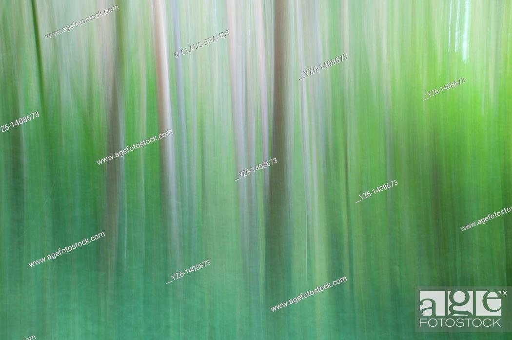 Stock Photo: Forest  Eifel NP, North-Rhine Westphalia, Germany.