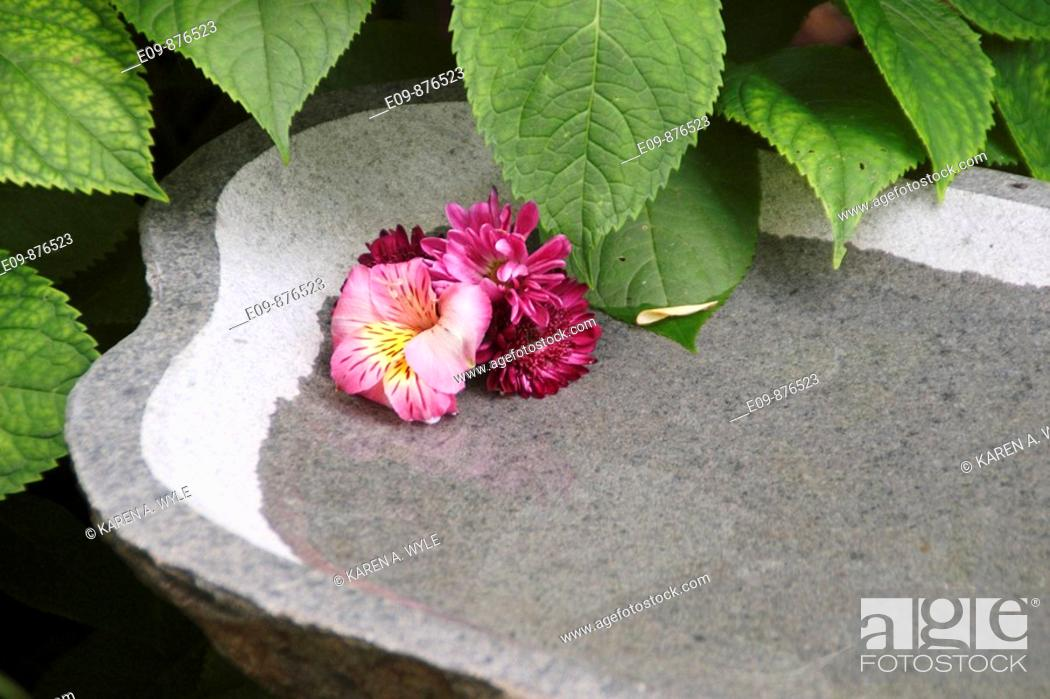 Stock Photo: flowers in one end of cement birdbath, with overhanging leaves, Bloomington, IN.