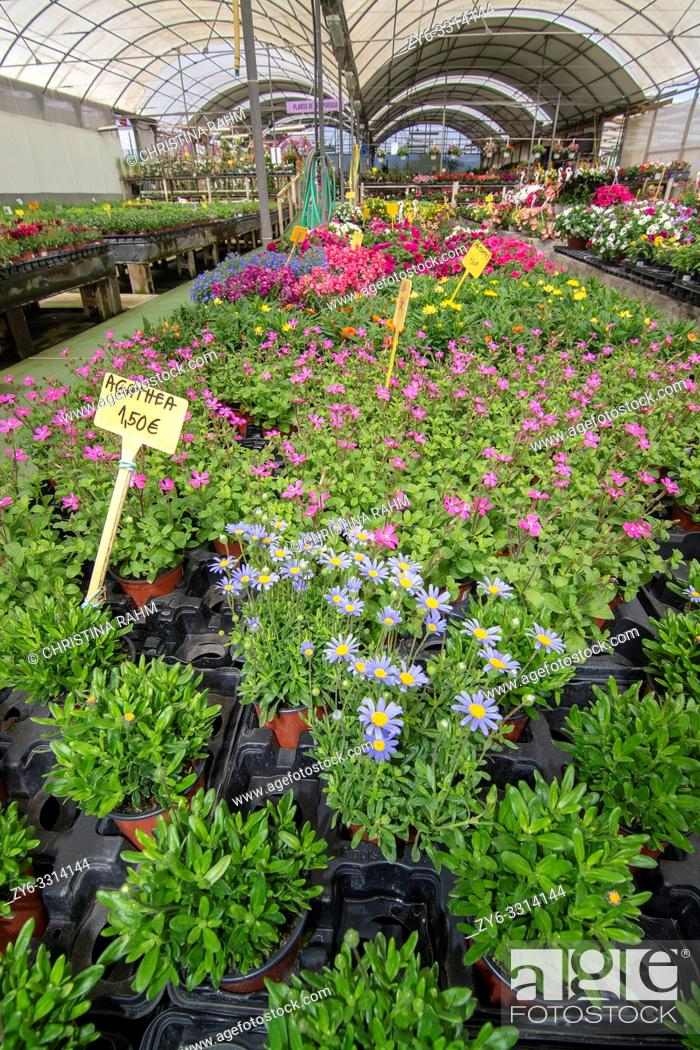 Stock Photo: MALLORCA, SPAIN - APRIL 10, 2019: Flowers and herbs in little pots inside greenhouse nursery on April 10, 2019 in Mallorca, Spain.
