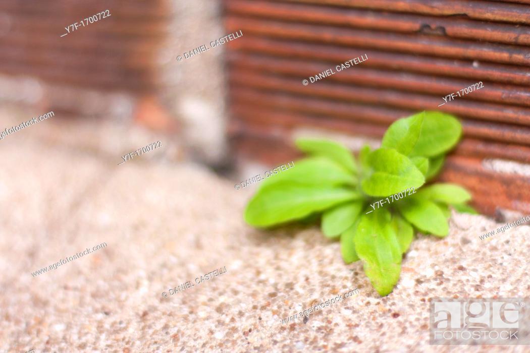 Stock Photo: Little green plants shoot.
