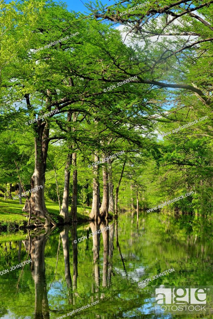 Stock Photo: Onion Creek with reflected cypress trees, Hays County, Texas, USA.