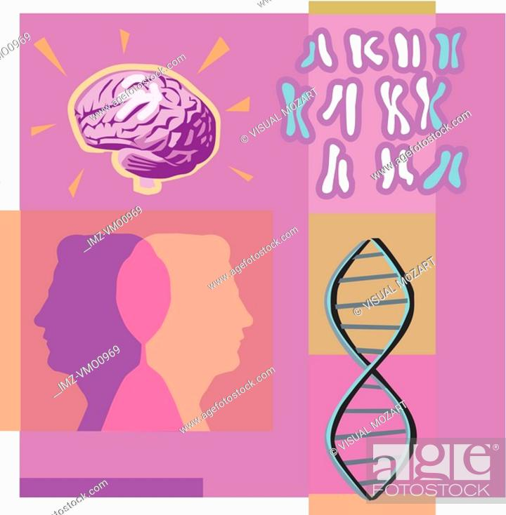 Stock Photo: Montage illustration about genetics containing two heads, DNA, a brain and chromosomes.