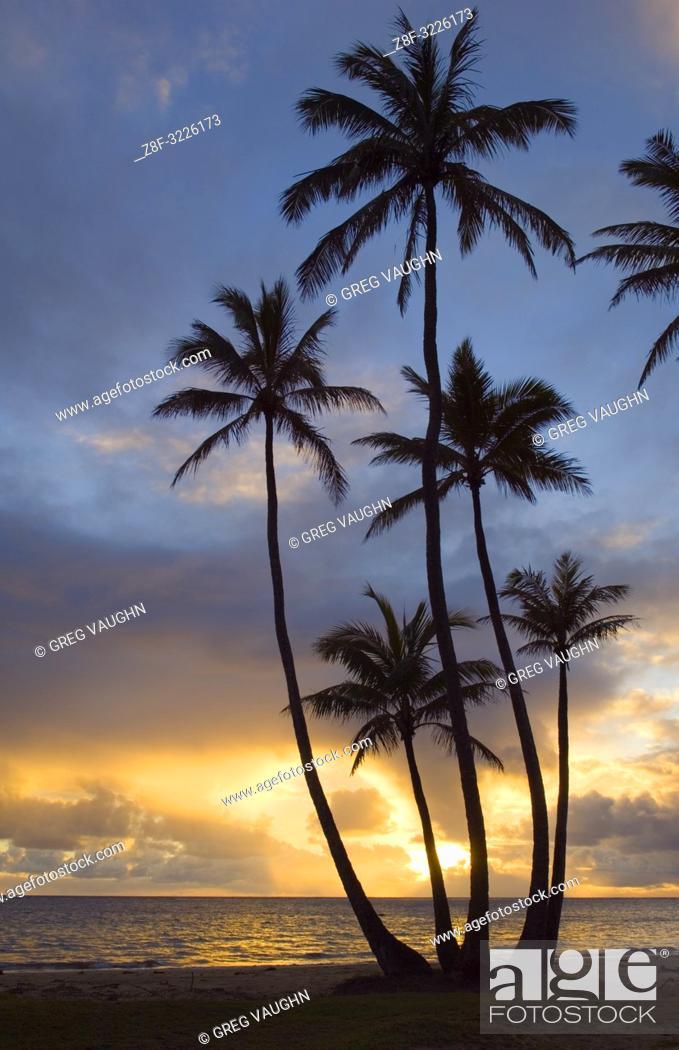 Imagen: Sunrise and coconut palm trees at Punalu'u Beach Park, Windward Oahu, Hawaii.