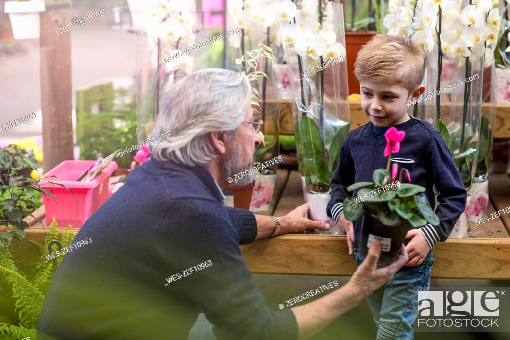Stock Photo: Elderly man giving a flower plant to boy at garden centre.