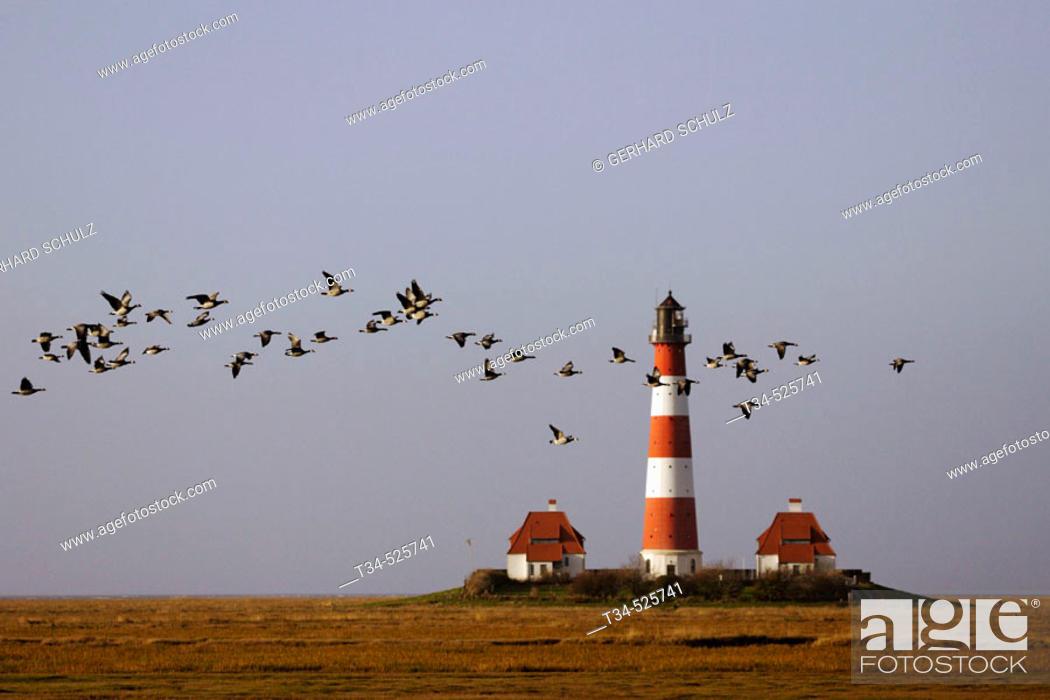 Stock Photo: Lighthouse. Barnacle Geese. Branta leucopsis. Westerhever. Schleswig-Holstein, Germany.