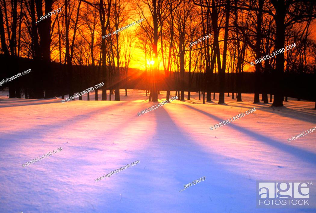 Stock Photo: Winter Landscape.