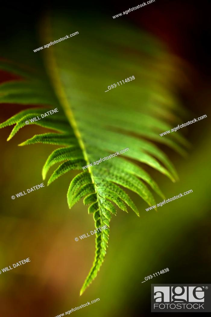 Stock Photo: close up of forest plants in spring.