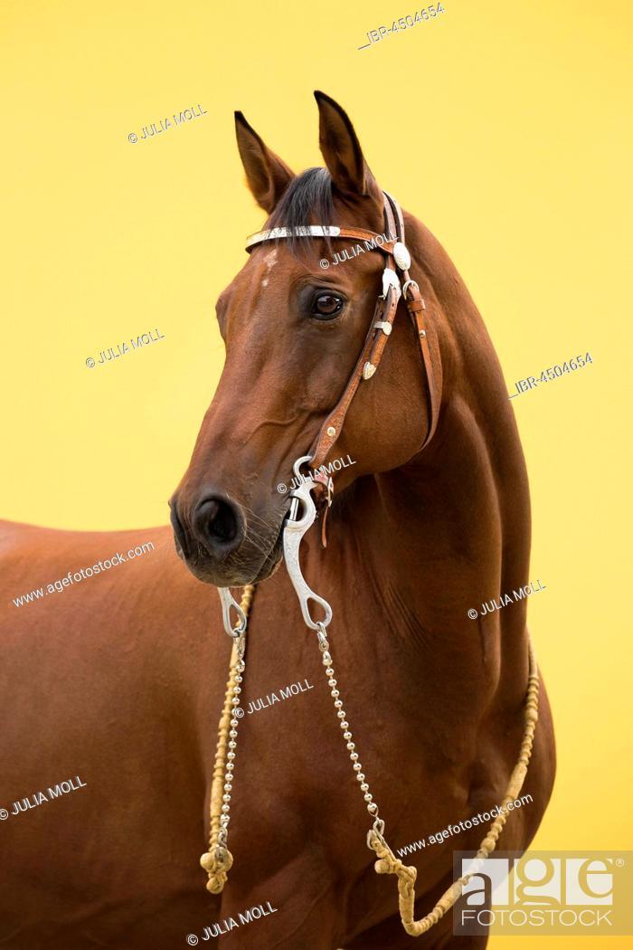 Stock Photo: Portrait Western riding horse.