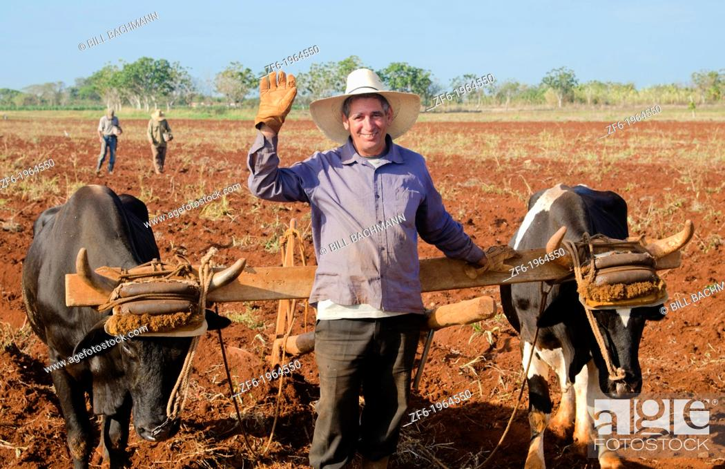 Stock Photo: Trinidad Cuba farmer with traditional plow with oxen in rich Cuban soil planting corn.